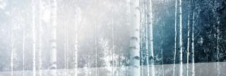 Skog banner